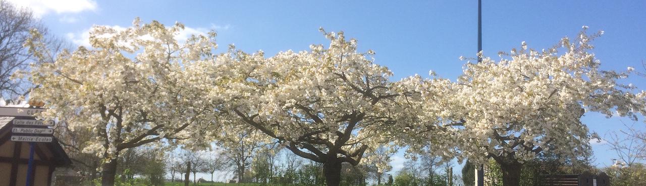1_arbre_centre